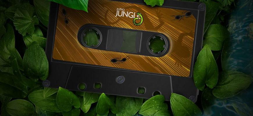 Музыкальный стиль Jungle - хардкорная электронная музыка с примесью регги