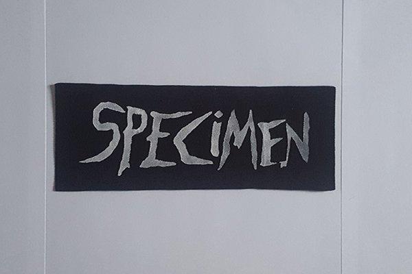 Новые Specimen и современное творчество
